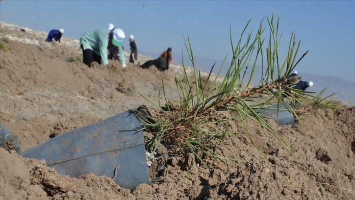 Turkey plants trees in arid Somalia