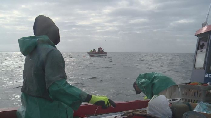 Overfishing destroys ecosystems in South Africa